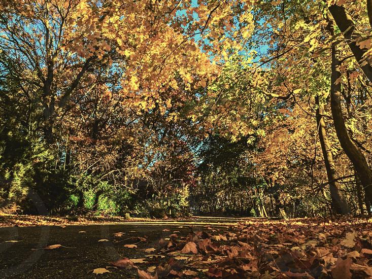 Autumn Long Island New York  photo