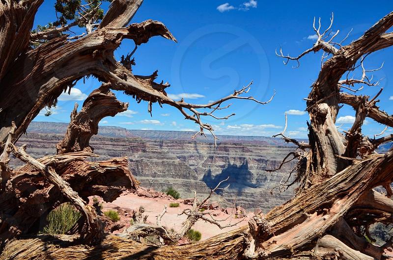 Grand Canyon - Arizona photo