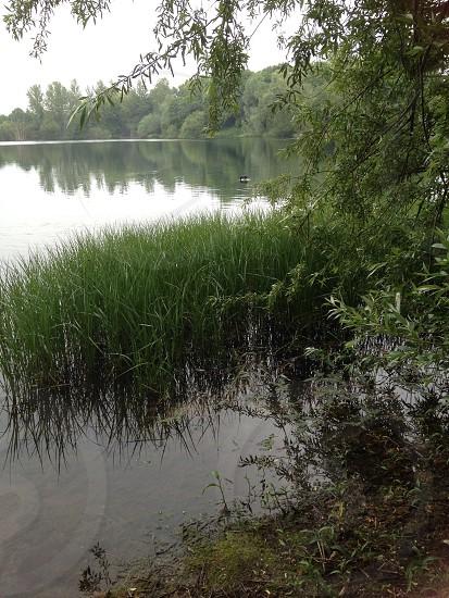 Water; nature; wildlife  photo