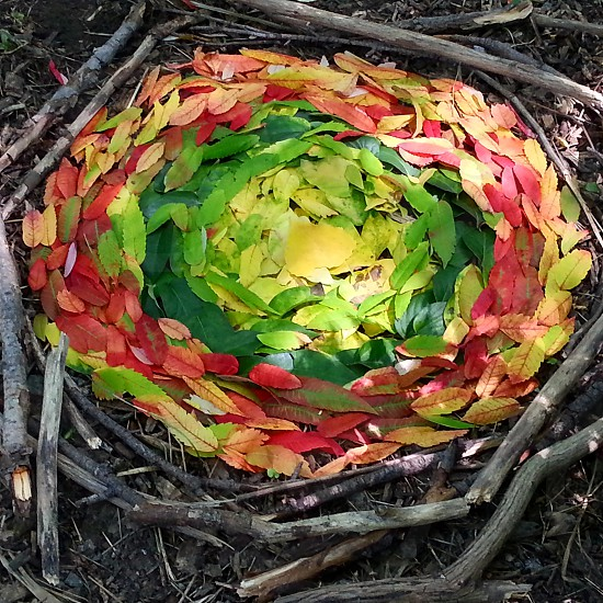 various coloured leaves arranged in a circle surrounded by sticks photo