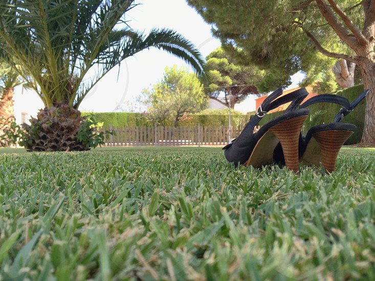 Lawn landscaping. Grass green black high heel shoes pine trees palmtrees  photo