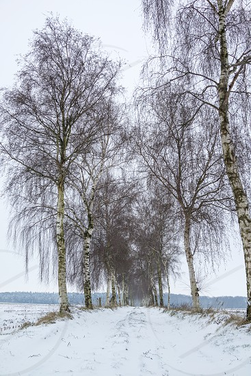 Winter landscape with snow covered road and birch trees photo