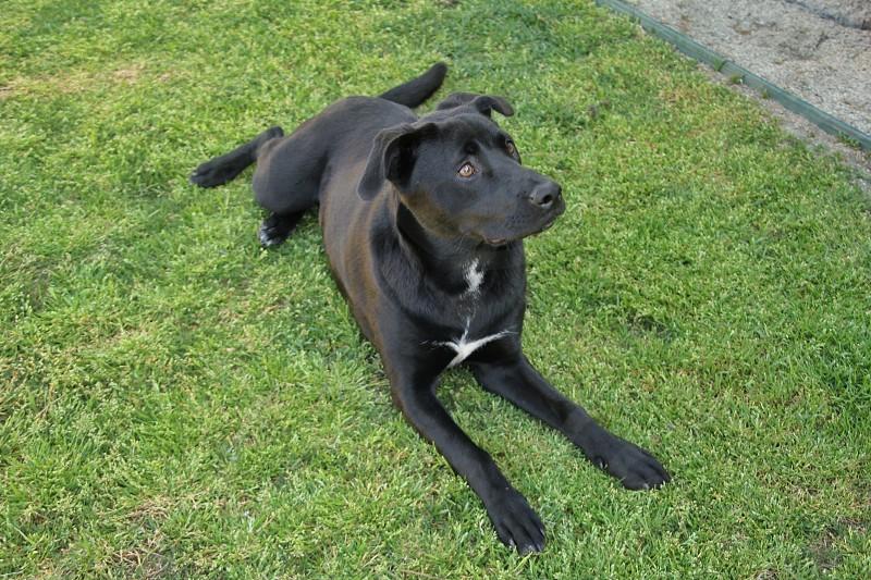 black dog laying on ground photo