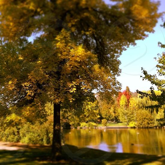 tree landscape and pond photo
