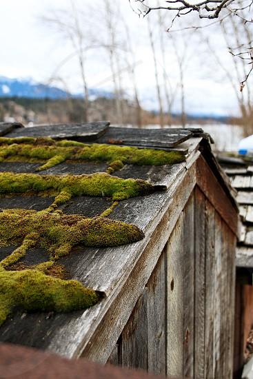 moss shack winter wood house photo