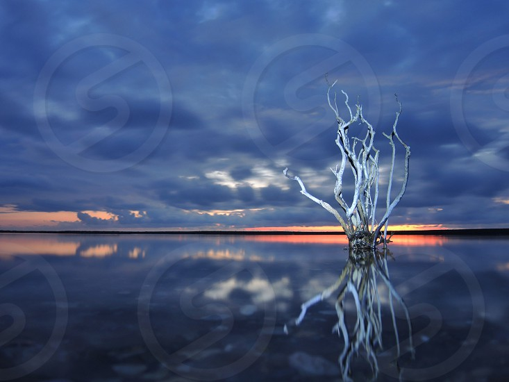 white branches on body of water photo