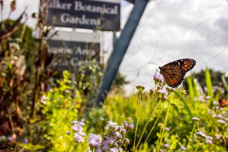 Zilker Botanical Garden photo