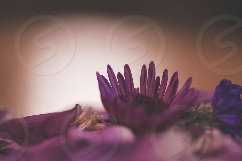 purple flowers in full bloom photo