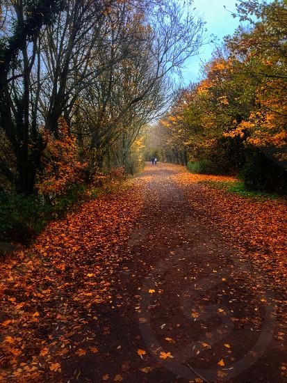 Autumn Landscape at Dinton Park Berkshire UK photo
