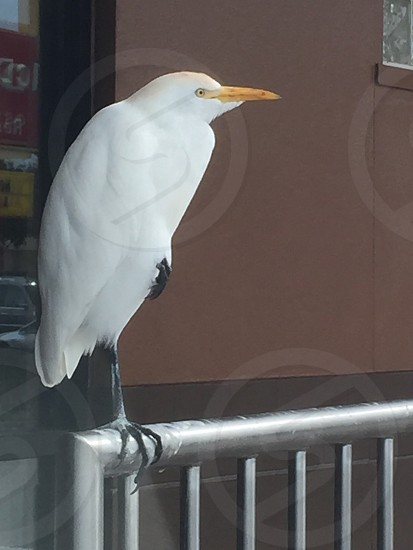 One Bird One Foot photo