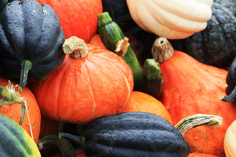 Gourds in a pile. Halloween pumpkins fall colorful colourful  photo