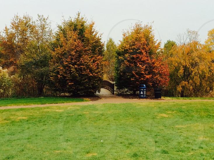 Twin trees and hidden bridge. photo