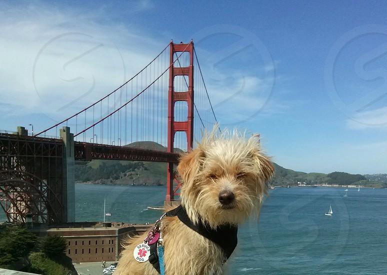 Traveling buddy photo