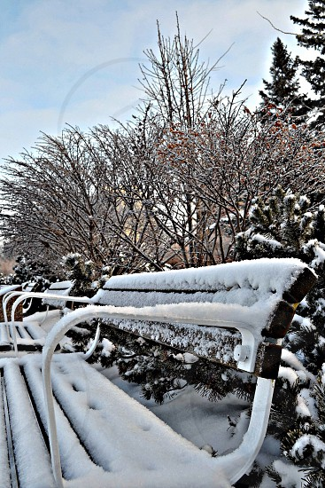 Snow covered benches on a chilly morning walk  photo