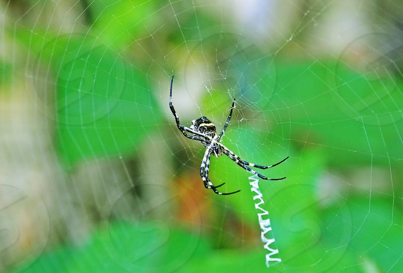 Spider weaves its net photo