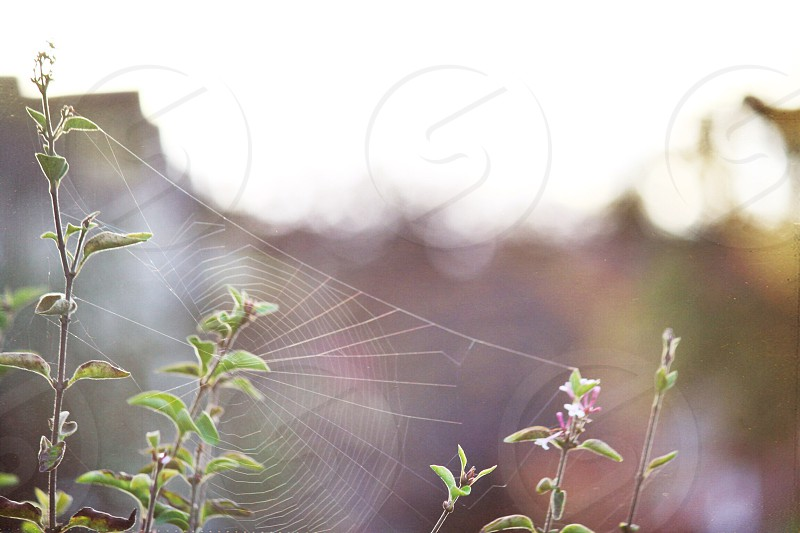 close up photo of spider web on green leaf plant photo