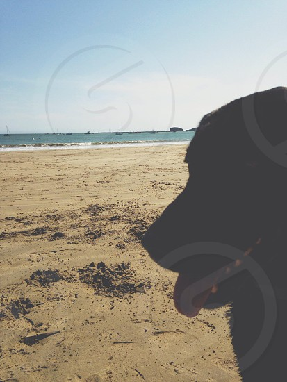 dog silhouette on the beach view photo