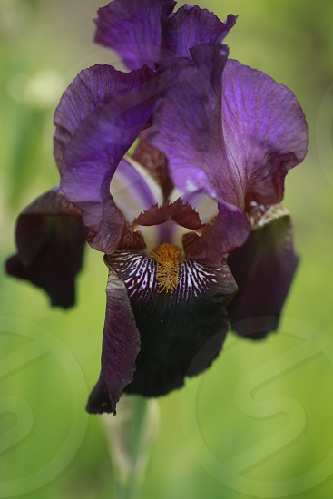 close up photo of purple orchid gaining the momentum of blossoming during daytime photo