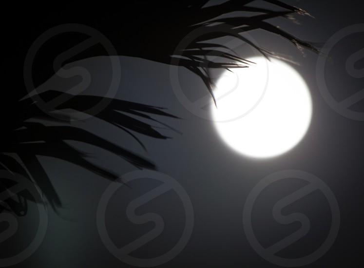 Florida Supermoon beach palm tree silhouette monochromatic black and white low light moon photo