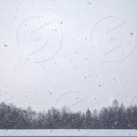 snow drops gray scales photo