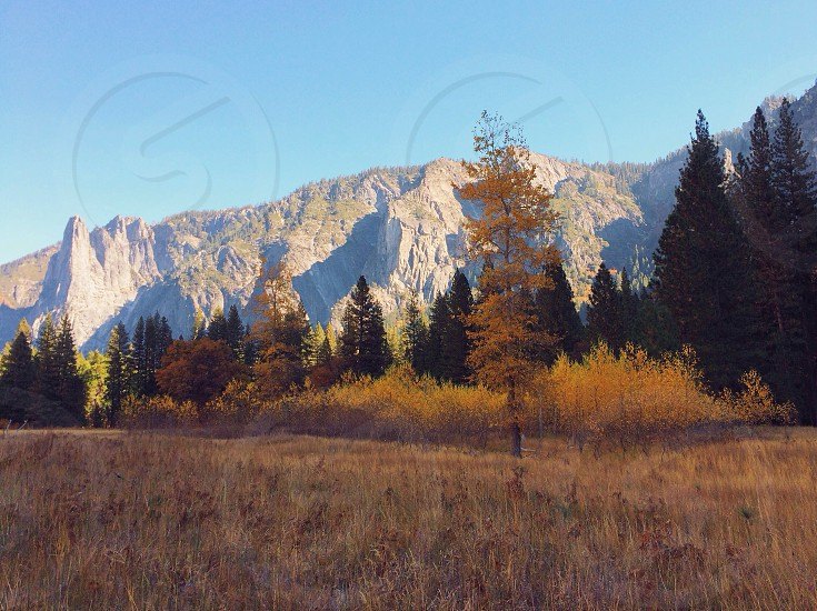 forest and mountain background photo photo