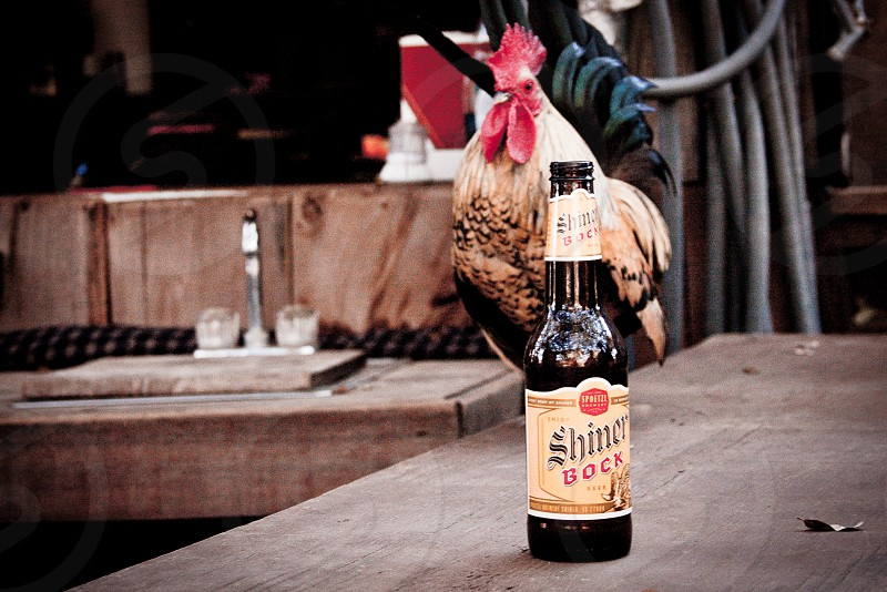 a brown and black colored rooster behind a shiner bock black bottle on top of a brown table photo