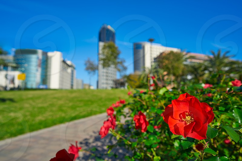 Valencia modern town city red flowers from the park view in Spain Mediterranean photo