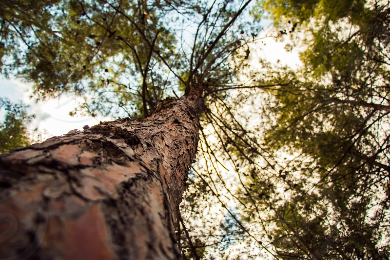 Tree with a narrow depth of field.Brownish color. photo