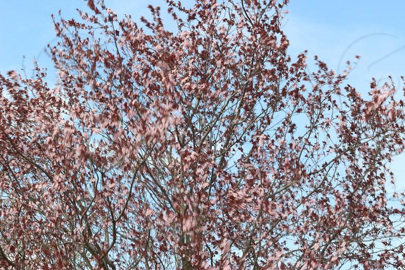 beige leaved tree photo