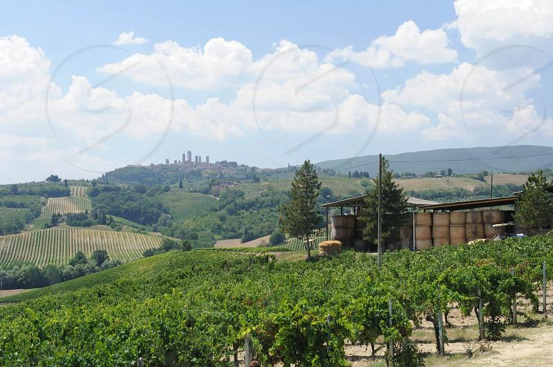 view of grape vineyard photo