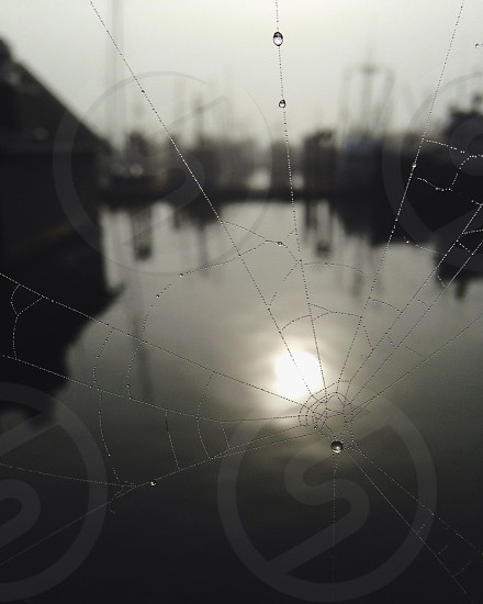 spider web with water dew photo