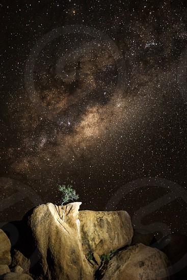 Impossible tree growing from granite outcrop. photo