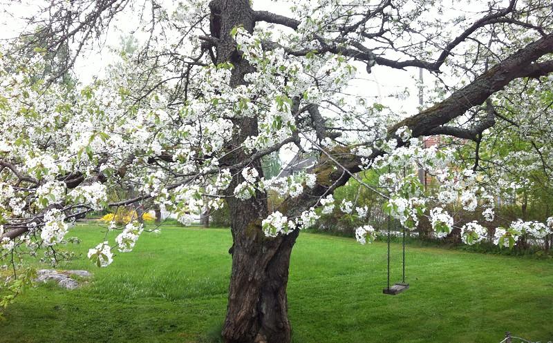 spring swing photo