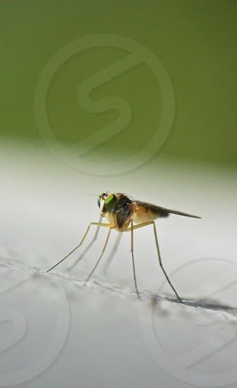 Tiny Fly Green  photo