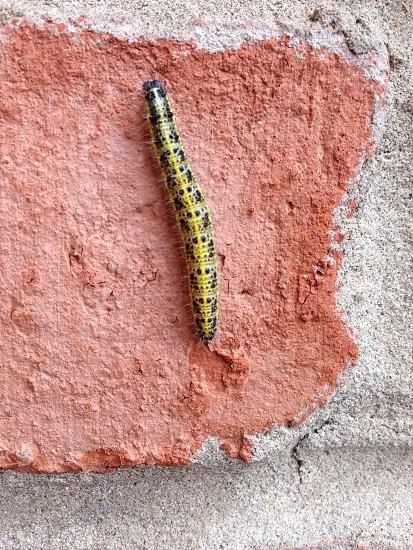 Caterpilla photo