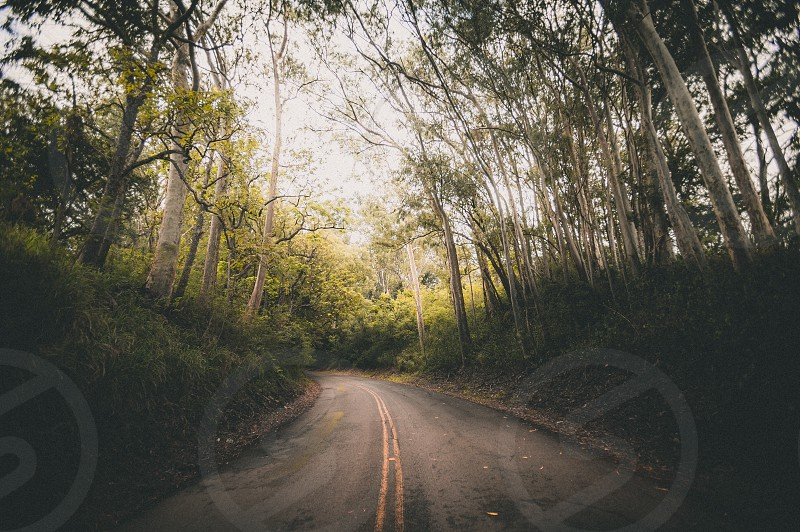 gray long road between green trees during daytime photo