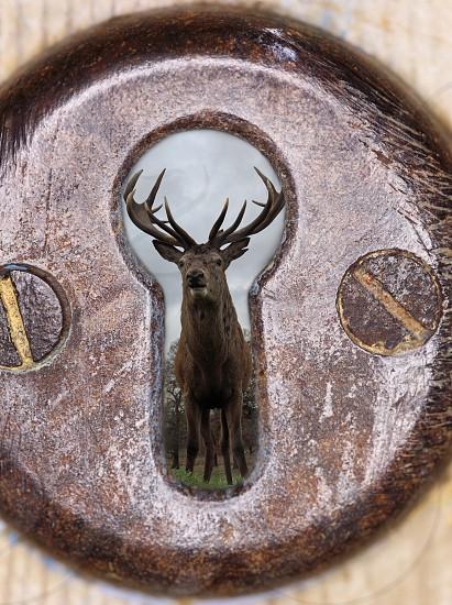 Through the keyhole photo