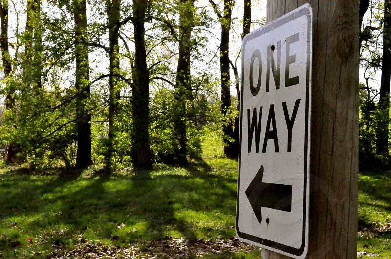 ONE WAY into the woods photo