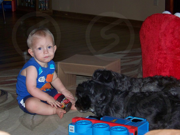 Cute dogs waiting for snacks and an even cuter kid waiting for lunch photo