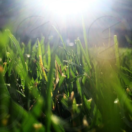 green grass and a light photo