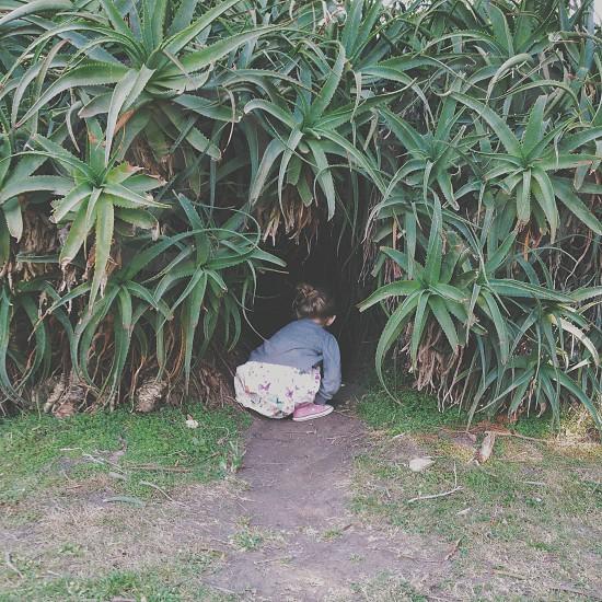 Hiding place photo
