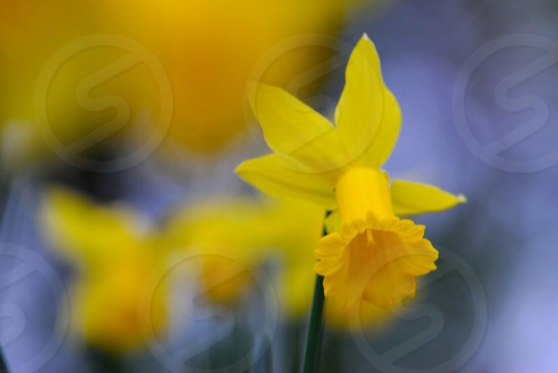 closeup photo of yellow petaled flower photo