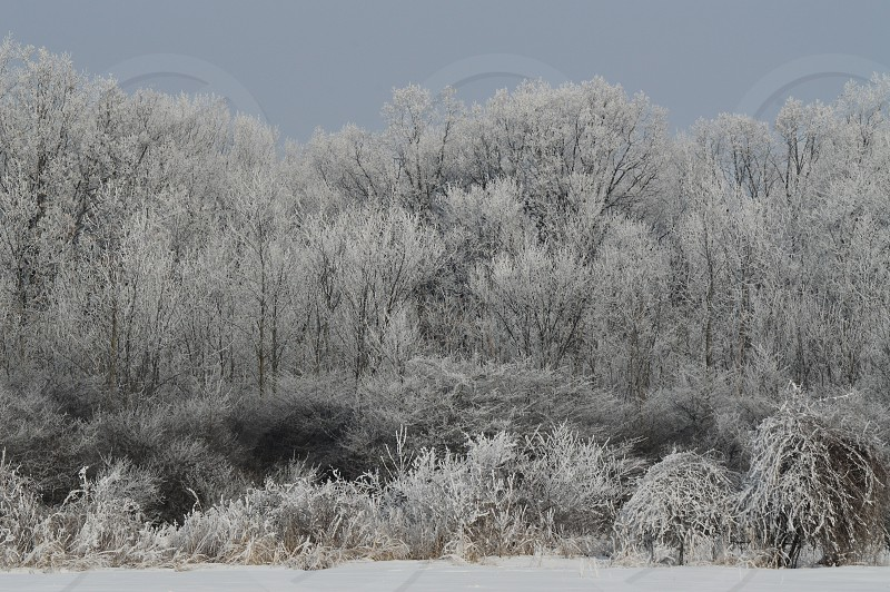 snow white winter weather frost ice crystals December photo