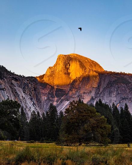 Yosemite at sunset with a bird photo