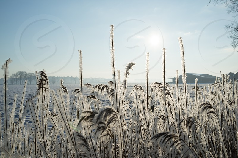 Snow landscape ethereal  light barn sun reed photo