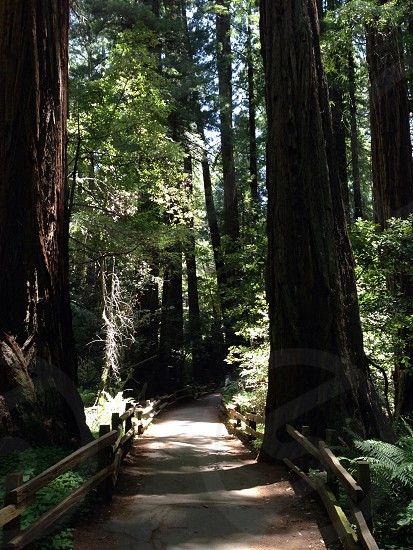 Muir Woods in beautiful San Francisco CA! photo