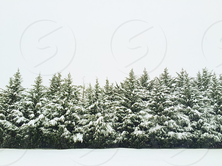 Christmaswintersnow photo