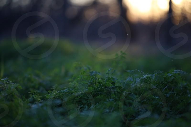 Green leaf plants photo