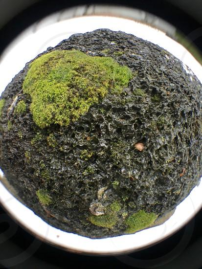 Flora fauna nature  photo