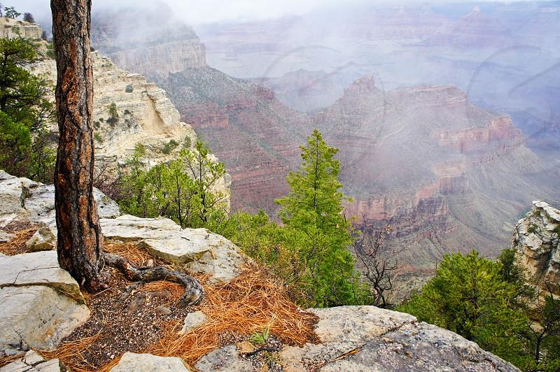 South Rim Grand Canyon photo